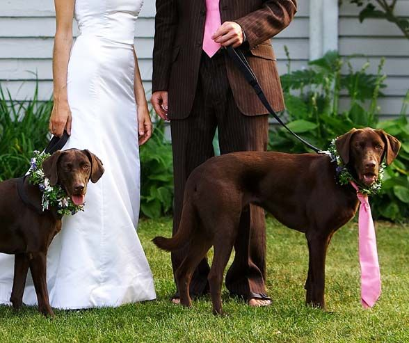 A pink tie that matches the groom's makes your pup a true part of the wedding party.