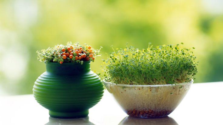 Самая нужная весной вещь - витамины. Как создать свой мини-огородик на подоконнике - читайте в блоге Abbigli.ru  https://abbigli.ru/blog/kak-vyrastit-salat-doma  #Abbigli #рукоделие #хобби #креатив #handmade