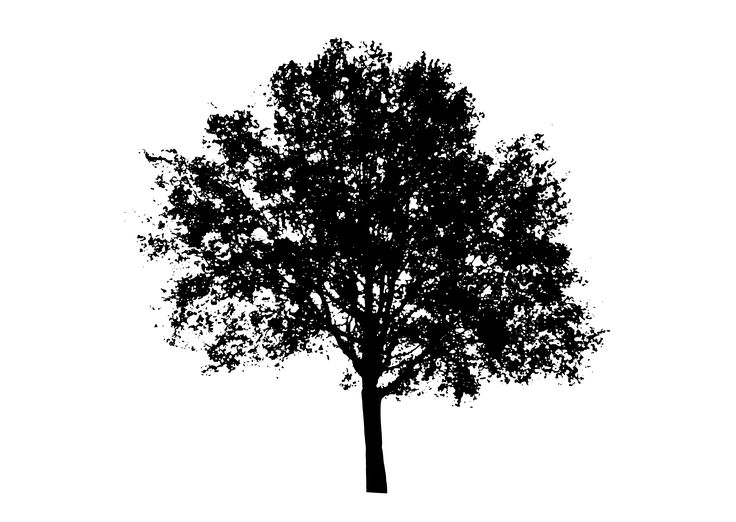 white tree silhouette png - PNGDOT.COM - Free PNG Images, Cliparts ...