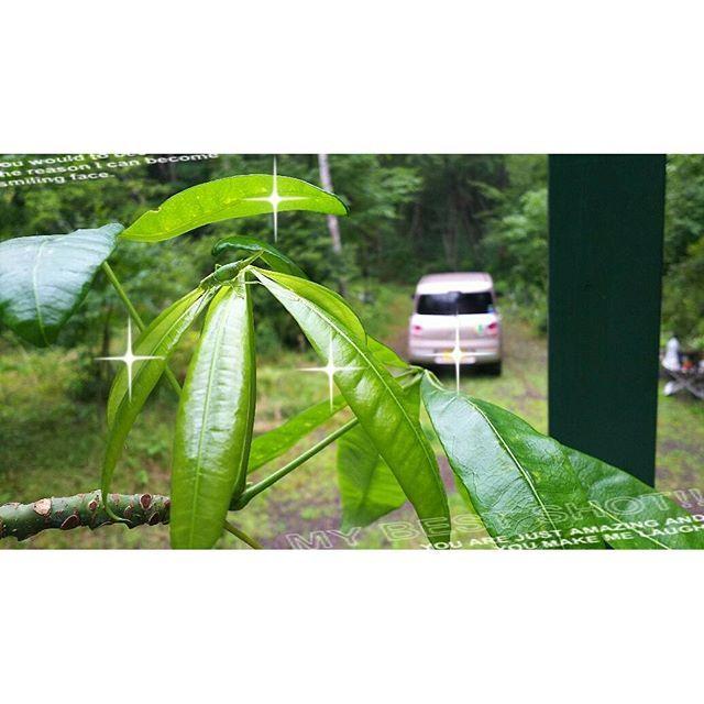 【chairousagi】さんのInstagramをピンしています。 《北軽井沢のバッタ(^^)庭からデッキのパキラさんまで遠征してきた模様。北軽井沢の森のお家は、虫と動物の訪問多し(´-ω-`)#北軽井沢#森#バッタ#庭》