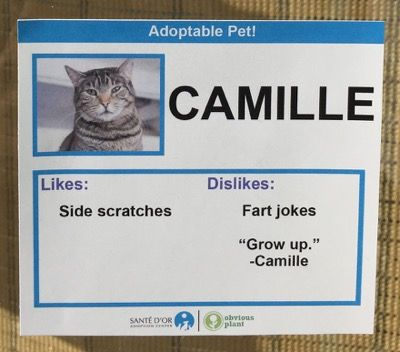 Best Funny Images On Pinterest Hilarious Ghana And Humor - This guy replaces pet names with fake labels in local pet store and its hilarious