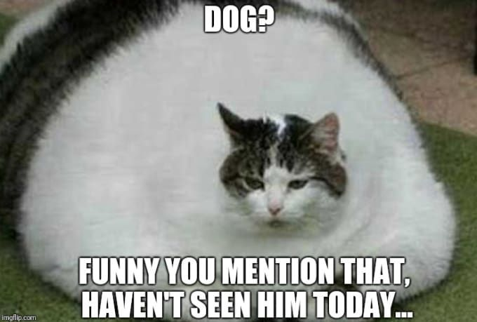 Insanely Hilarious Dog Memes About Food Funny Dog Memes Dog Memes Cute Cat Memes