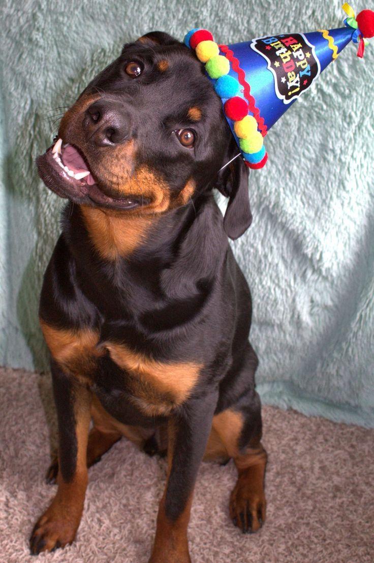С днем рождения ротвейлер картинки