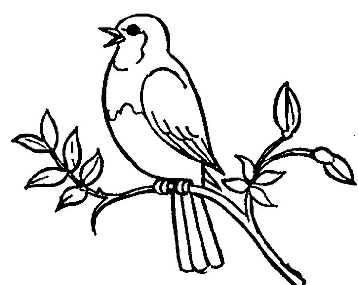 Bird Clipart | Arthur's Free Bird Clipart Page 10 | Clip ...