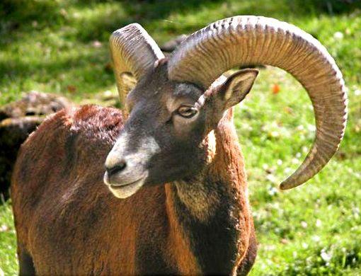fauna sarda | EVOLUZIONE DELLA FAUNA SARDA