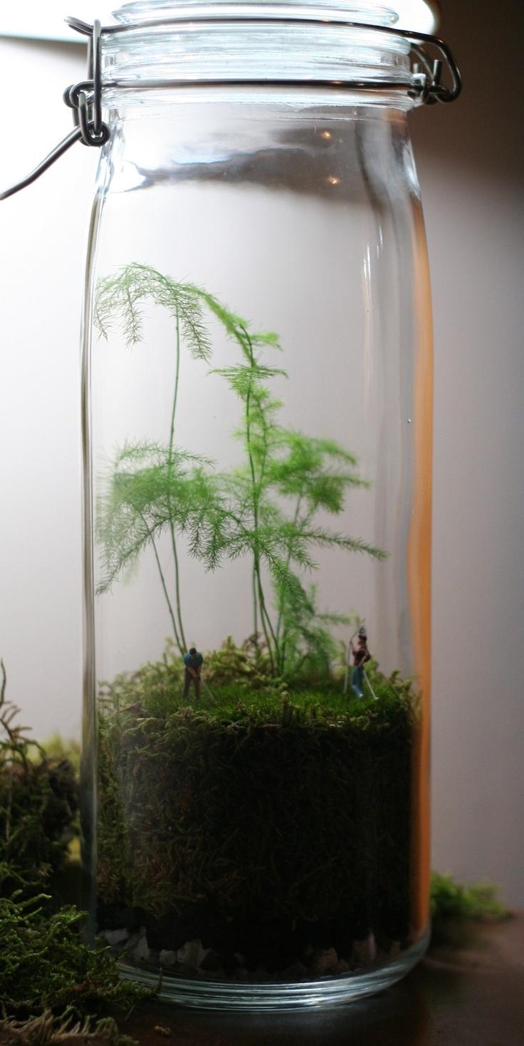 17 best images about terrarium on pinterest maidenhair. Black Bedroom Furniture Sets. Home Design Ideas