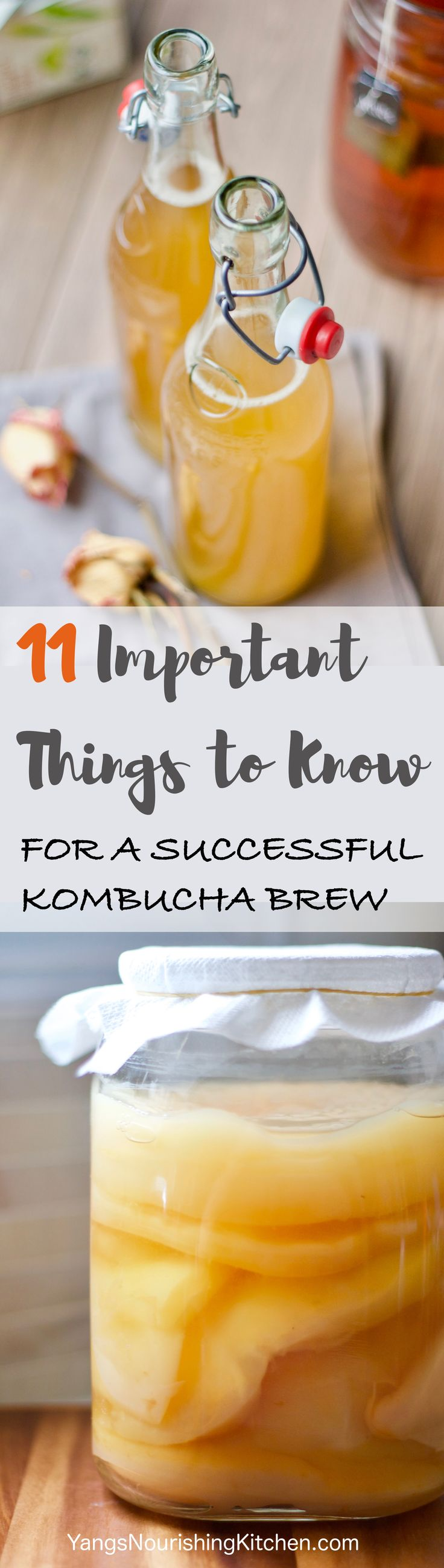 Kombucha Series Part #1: 11 Important things to know for a successful kombucha brew. Let's dive a little deeper - this article covers a list of important questions and answers to make kombucha 1st fermentation as successful as possible. Also included a basic recipe and instruction for those who are just starting out from the beginning.