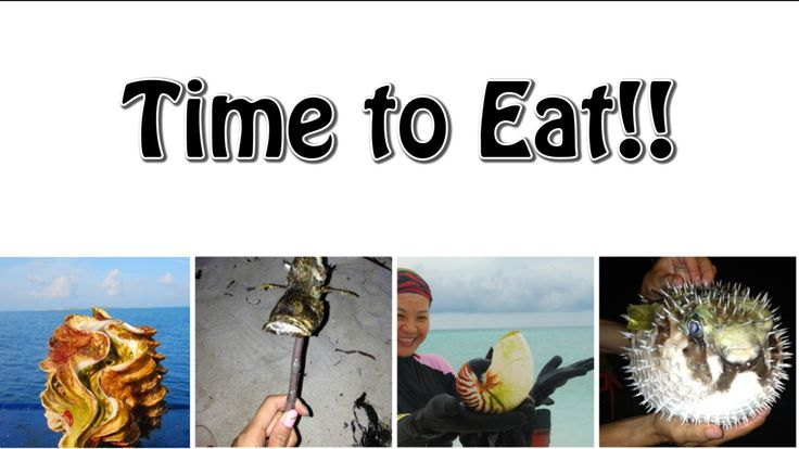 Chinese Snorkelers Eat Endangered Seafood Located in the South China Sea, the Paracel Islands had, until recently, been shut off to humanity for decades. This allowed them to become mini-Edens overflowing with abundant and glorious wildlife. But while the story of the Garden of Eden ends with Adam and Eve eating an illicit apple, the story of the Paracel Islands' ends like the OTT blockbuster version of Genesis...