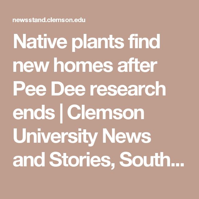 Native plants find new homes after Pee Dee research ends | Clemson University News and Stories, South Carolina