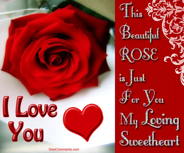 Rose Day Images Download - All Top Story