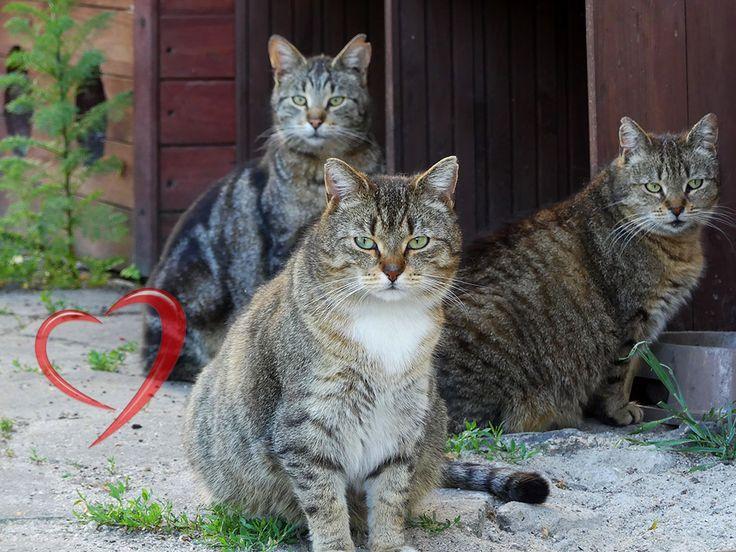 Fundacja Koty SOS istnieje od niedawna i z racji krótkiego stażu nie ma jeszcze uprawnień do pozyskiwania 1% z podatków Darczyńców. Dysponuje niedużymi środkami i w związku z tym gospodaruje nimi z nadzwyczajną starannością. Założycielka fundacji pomaga kotom od 12 lat. Stworzyła ona w tym czasie 1