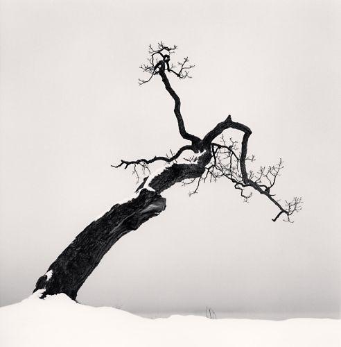 Michael Kenna, Kussharo Lake Tree, Study 4, Kotan, Hokkaido, Japan, 2007