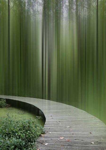 Área Visual: La fotografía de Ellen Jantzen