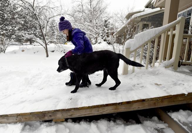 Un cartero perruno y maravilloso: le regala una rampa a un can viejito para que pueda salir de casa