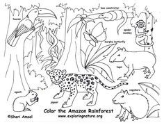 29 best Coloring Habitats and Animals images on Pinterest Animal