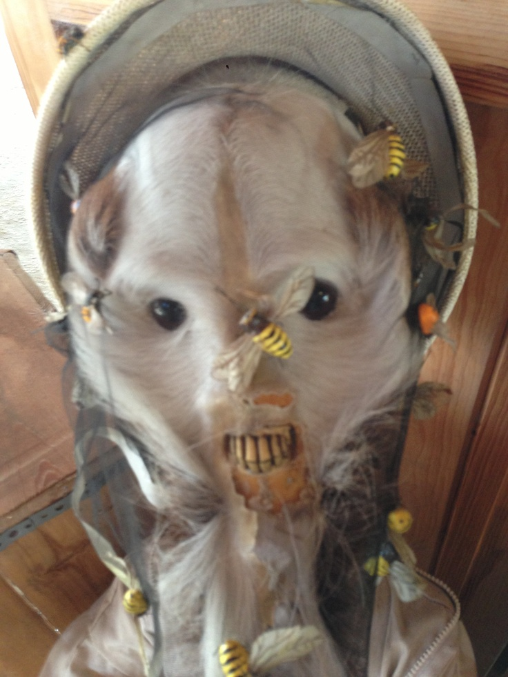 Odd Taxidermy Near Orlando Oddities I Ve Found