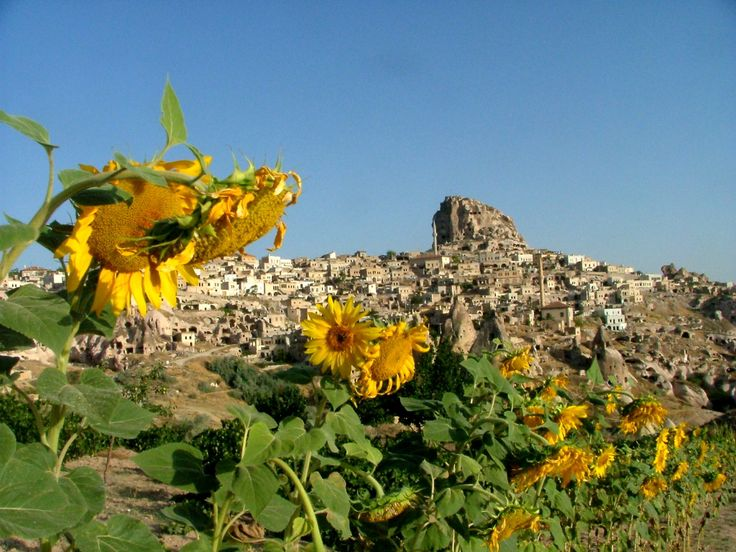 Turquie  #landscape #tournesol #view  http://www.terresdecharme.com/hotel-istanbul-voyage-cappadoce_sejour-turquie-luxe_voyage-sur-mesure.aspx