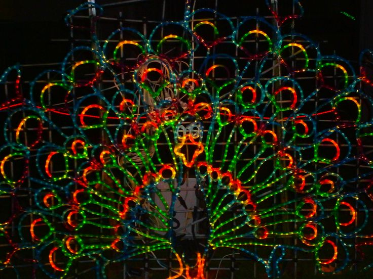 Taken at the Toledo Zoo, Lights Before Christmas!  Its an amazing event, if you in Toledo, Ohio between Thanksgiving and New Years, its a Must See!