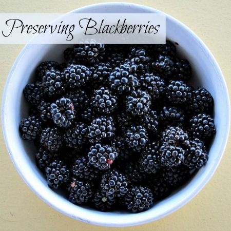 Tips and methods for preserving blackberries.   A bowl of blackberries ready for preserving. Flickr image by Stephen Rees
