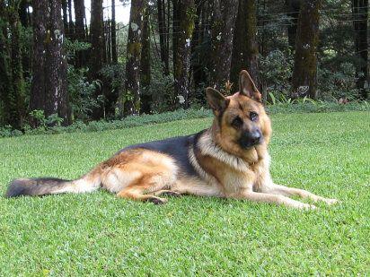 Causas de la epilepsia en perros