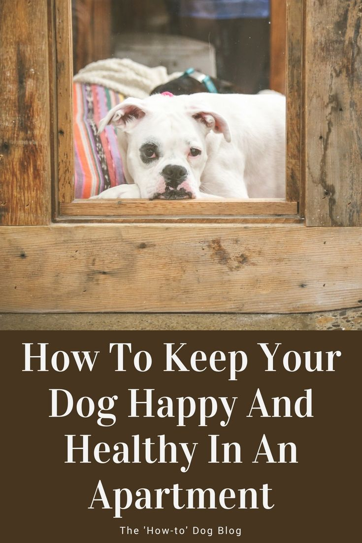 Check Out These 5 Tips For Keeping Your Dog Hy And Healthy While Living In An Apartment