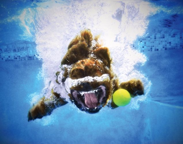 Underwater Dogs 2013 Calendar - Underwater dogs: Hilarious snaps of dogs playing fetch ... head first into water - NY Daily News