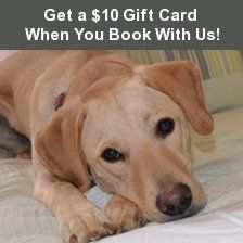 The Homestead Bed Breakfast At Rehoboth Beach - Pet Friendly - Rehoboth Beach, Delaware