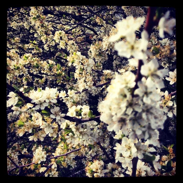 Spring garden at wombat hill house Daylesford