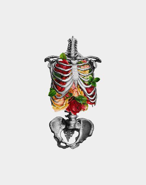 love: Rose, Skull, Anatomy, Bones, Art Prints, Illustration, Skeletons, Tattoo, Flowers