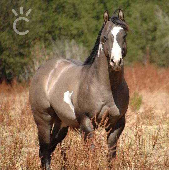 e19b8f1df51c0c7fc5674d4f31896ffc--pretty-horses-beautiful-horses.jpg (540×545)