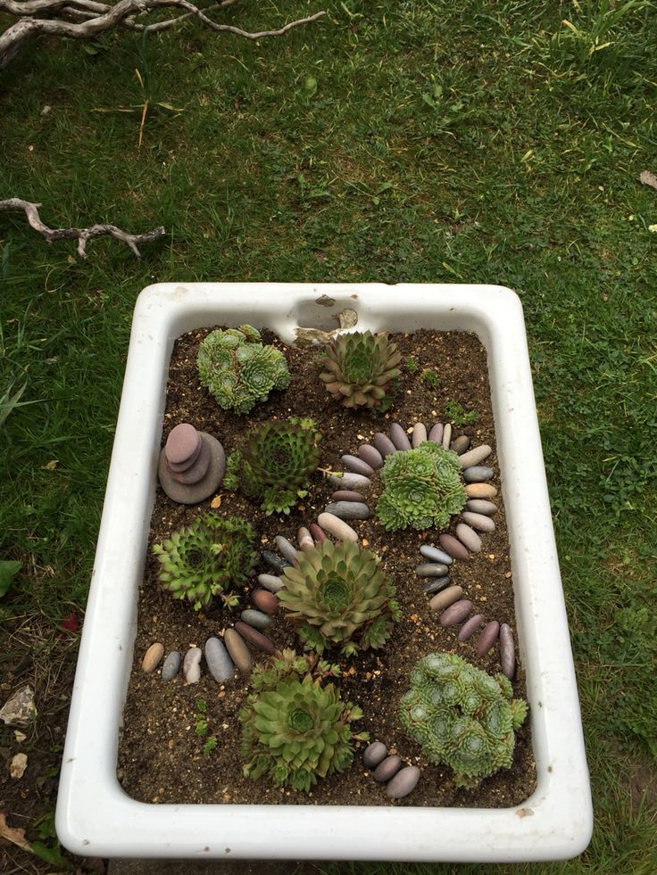 Succulents in Belfast sink