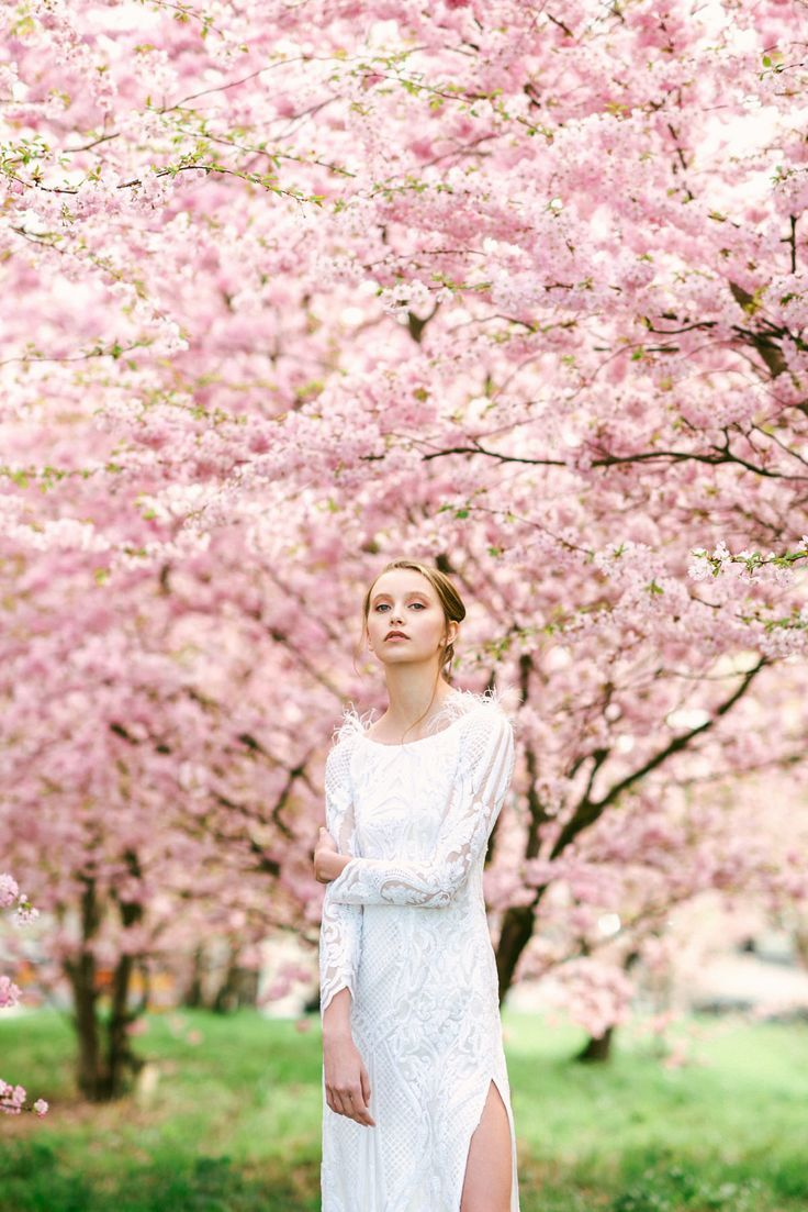 Cherry Blossom Photoshoot By Jose Chan Blossom Chan Cherry Cherryblossom Jose Photoshoot Spring Photoshoot Cherry Blossom Pictures Spring Photography