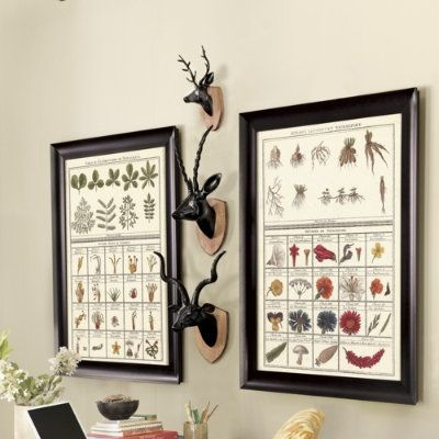 rare book collection of botanical & butterfly printables