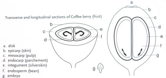 40 best infographics  learn about coffee with great