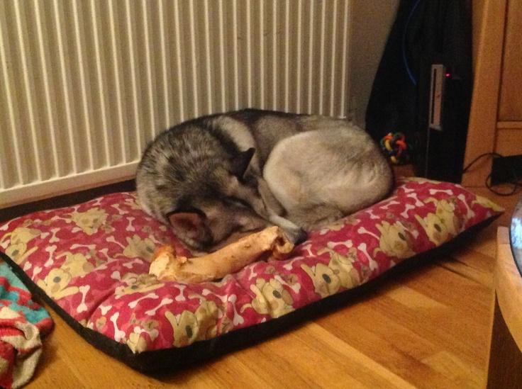 Guarding her bone