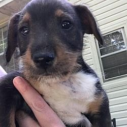 Pin by Lea Nichols on Helping Precious Animals Pets