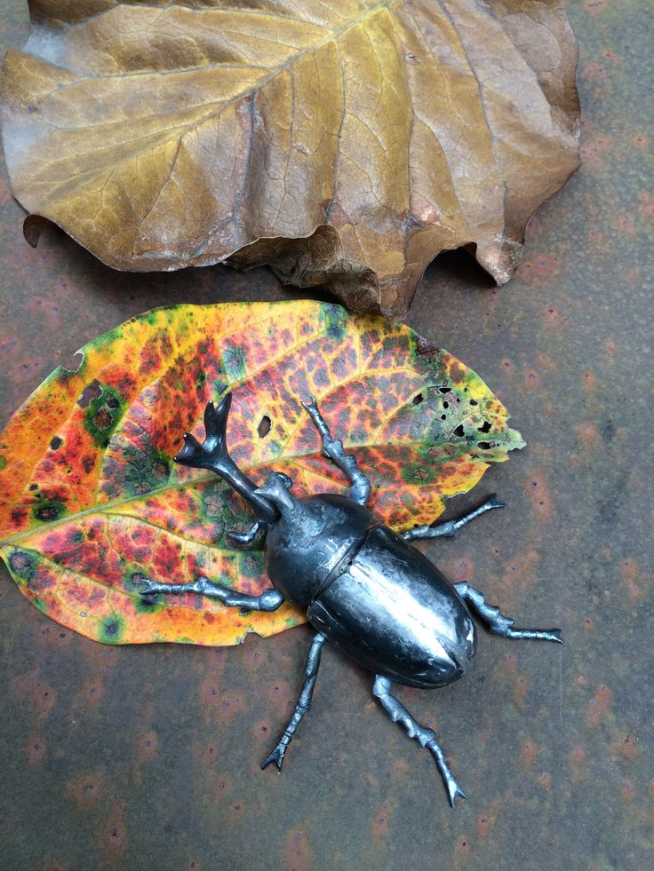 titel: Unseasonably Beetle  季節外れの甲虫