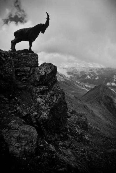 Some people think monkeys are the best climbers and that would be true. But lets not forget about the goat please. They are pretty bad ass.