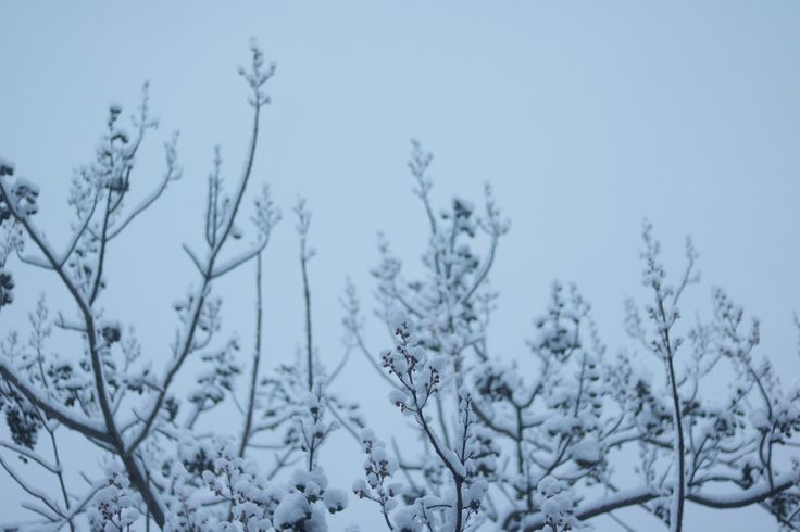 morning. #fog #morning #cold #winter #tree #nature