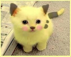 Resultado de imagen para imagenes de gatitos tiernos y graciosos