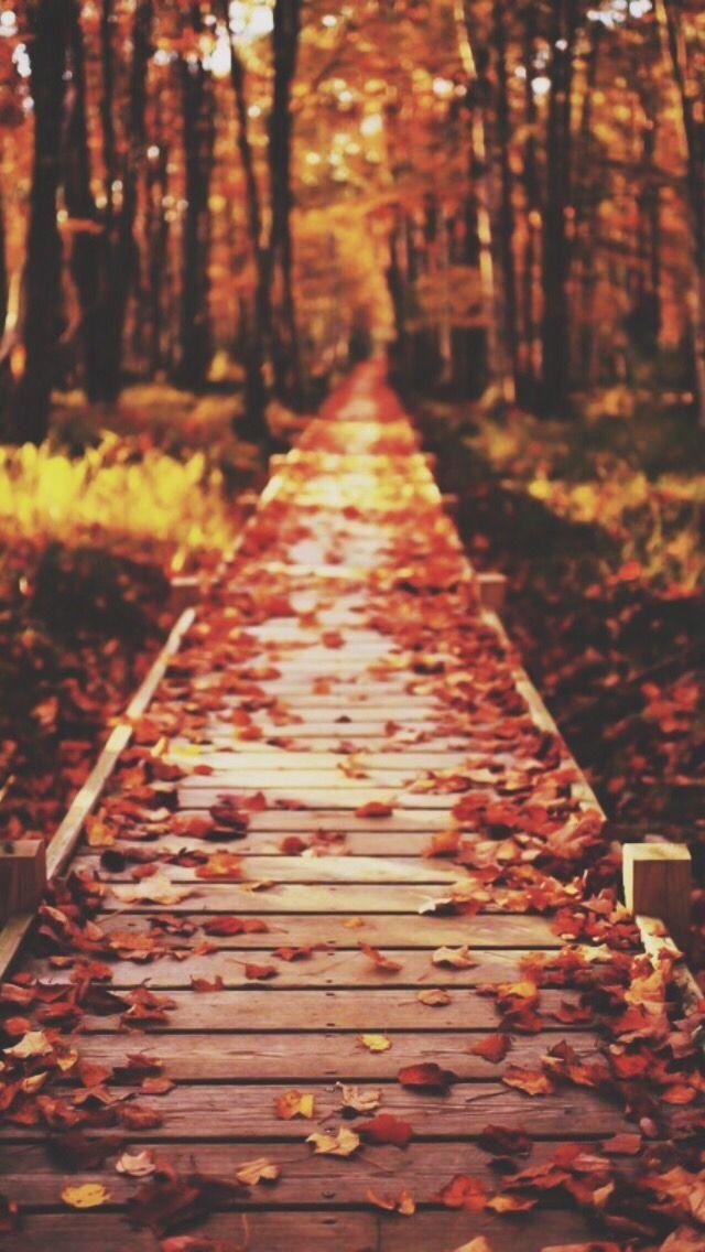 Fall Wallpaper Tumblr Sonbahar