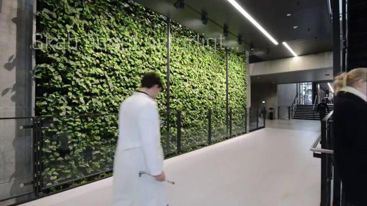 Plantevægs projekt på 204 m2.