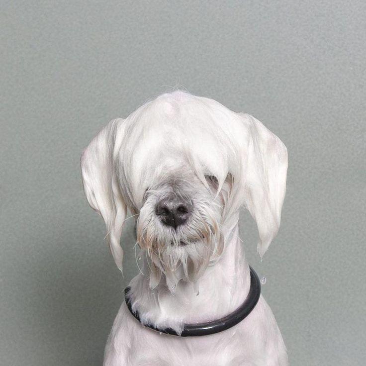 Wet Dog 2 / Sophie Gamand