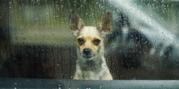 petition: Hotels Must Allow Pets of Families Seeking Hurricane Shelter! / https://www.thepetitionsite.com/325/129/478/