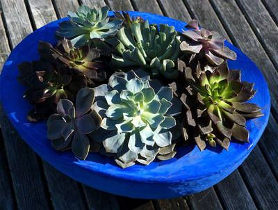 nice article on how to plant and grow succulents: Plants Container, Green Thumb, Container Gardens, Succulent Gardens, Succulent Plants, Garden Tips, Container Gardening, Gardens Tips