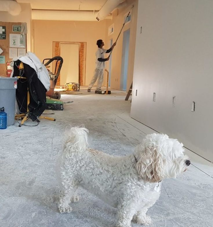 How Many Coats Of Primer For Any Situation You Ll Like The Answer Home Maintenance Dog Training Tips Dog Training