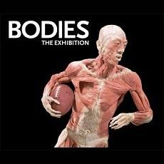 The Bodies Exhibit at The Luxor Las Vegas gives audiences an unprecedented view of the inner workings of the preserved human body...