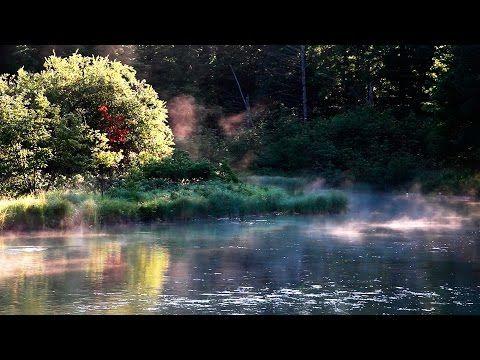 FORÊT LA NUIT - Grillons Pluie Hiboux Vent Dans les Branches - Etude Détente Sommeil Spa  TV RELAX - YouTube