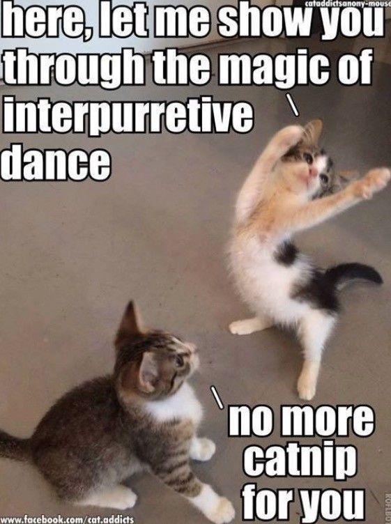 Enjoy funny pet memes, including cat memes, your favorite dog memes … – Animals – #Animals #also #your #den …