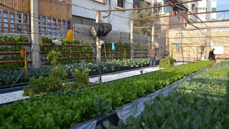 Los habitantes de Gaza encuentran en la acuaponía respuesta a la falta de agua y tierras de cultivo